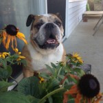 Puddy in Flowers