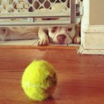Tennis ball just out of reach